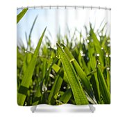 Dewdrops On New Wheat Shower Curtain