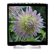 Dewy Dahlia Shower Curtain