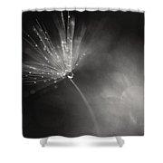 Dewy Dandelion Fireworks Shower Curtain