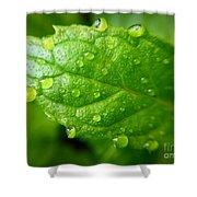 Dewy Mint Shower Curtain