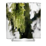 Dewy Moss Shower Curtain