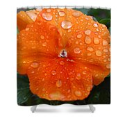 Dewy Pansy 1 Shower Curtain
