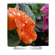 Dewy Pansy 2 - Side View Shower Curtain