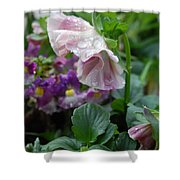 Dewy Pansy 4 Shower Curtain