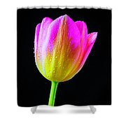 Dewy Pink Yellow Tulip Shower Curtain