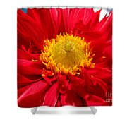 Dhalia Shower Curtain