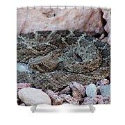 Diamondback Rattlesnake 062414a Shower Curtain