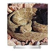 Diamondback Rattlesnake 062414f Shower Curtain