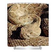 Diamondback Rattlesnake Close-up 062414a Shower Curtain