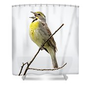 Dickcissel  Shower Curtain