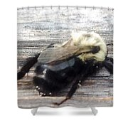 Different Take Of A Bee Shower Curtain