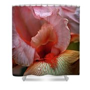 Digital Oil Painting Pink Iris 9915 O_2 Shower Curtain