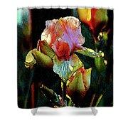 Digital Painting Vibrant Iris 6764 Dp_2 Shower Curtain