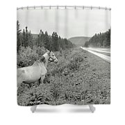 Dilemma On Highway #1, Chickaloon, Alaska Shower Curtain