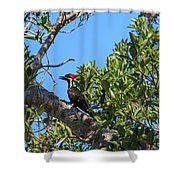 Ding Darling - Pileated Woodpecker Resting Shower Curtain