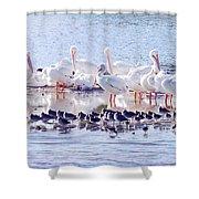 Ding Darling Wildlife Refuge V Shower Curtain