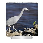 Ding Darling Wildlife Refuge Vii Shower Curtain