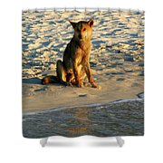 Dingo On The Beach Shower Curtain
