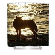 Dingo Sunset Shower Curtain
