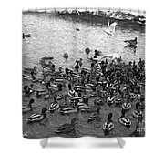 Dinner Is Served - Black And White Shower Curtain
