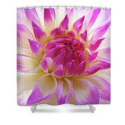 Dinner Plate Dahlia Flower Art Prints Canvas Floral Baslee Troutman Shower Curtain
