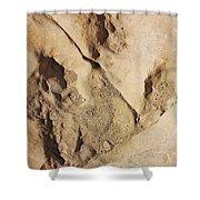 Dino Tracks In The Desert 2 Shower Curtain