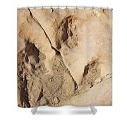 Dino Tracks In The Desert 3 Shower Curtain