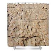 Dino Tracks In The Desert 4 Shower Curtain