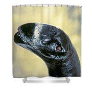Dinosaur: Camarasaurus Shower Curtain