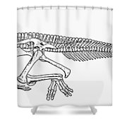 Dinosaur: Corythosaurus Shower Curtain