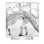 Dinosaur: Stegosaurus Shower Curtain