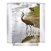 Dip In The Pond Shower Curtain