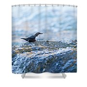 Dipper Searching For Food Shower Curtain
