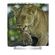 Dirty Paws Shower Curtain