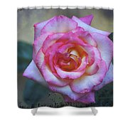 Dirty Pink Rose Shower Curtain