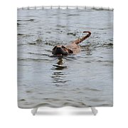 Dirty Water Dog Shower Curtain