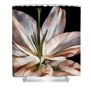 Dirty White Lily 3 Shower Curtain