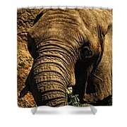 Disappearing Elephant Shower Curtain