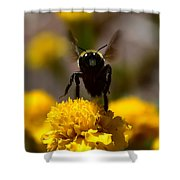 Disappearing Wings Shower Curtain
