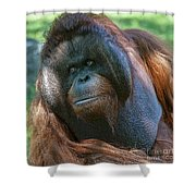 Disapproving Glance Shower Curtain