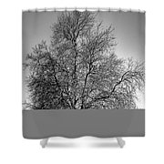 Discovery Park No.1 Shower Curtain