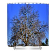 Discovery Park No.4 Shower Curtain