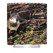 Disfigured Bird Shower Curtain