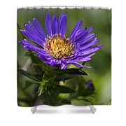 Display Of Softness Shower Curtain