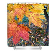 Distinctive Maple Leaves Shower Curtain