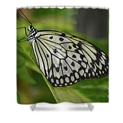 Distinctive Side Profile Of A White Tree Nymph Butterfly Shower Curtain