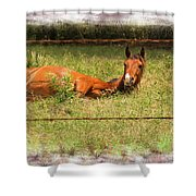 Disturbed Napping Shower Curtain