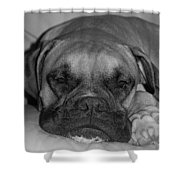 Disturbing His Nap Shower Curtain by DigiArt Diaries by Vicky B Fuller