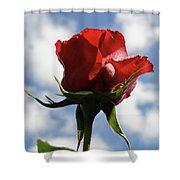 Diva Rose Shower Curtain