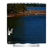 Dive Bomber Shower Curtain by Amanda Struz
